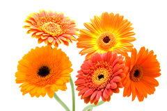 Bouquet of Gerbera flowers Royalty Free Stock Photos