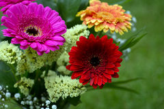 Bouquet From Gerbera Flowers Royalty Free Stock Image