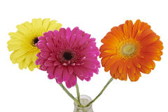 Bouquet of Gerbera flowers. Stock Photography