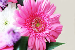 Bouquet with gerbera flowers Stock Photo