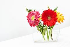 Bouquet of gerbera flowers Stock Image