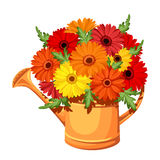 Bouquet of gerbera flowers in watering can. Vector Stock Photo