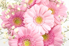 Bouquet of gerbera and gypsophila Stock Image