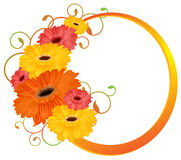 Bouquet gerbera isolated. Royalty Free Stock Image