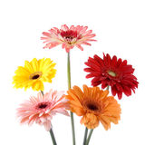 Bouquet gerberas Stock Photography