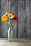 Bouquet of gerberas in a vase Royalty Free Stock Images