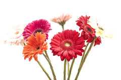 Bouquet of gerberas Stock Photography