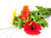 Bouquet with gerbers Stock Photography