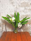 Ginger lily Stock Images