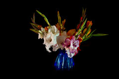 Bouquet of Gladiolus Stock Photos