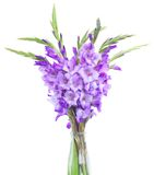 Bouquet of gladiolus flowers Stock Photos