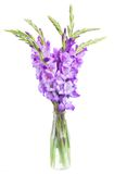 Bouquet of gladiolus flowers Stock Photography