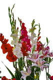 Bouquet of gladiolus and lily flowers Stock Photography