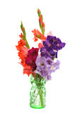 Bouquet of gladioluses. In vase isolated on white background Royalty Free Stock Image
