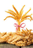 Bouquet grain, ears of corn. In front of white Royalty Free Stock Image