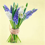 Bouquet of grape hyacinth flowers. Bouquet of blue and white grape hyacinth spring flowers on yellow easter background Stock Photo