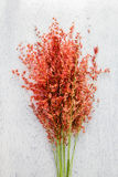 Bouquet of grass flowers Stock Image