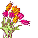 Bouquet of hand drawn pink and yellow tulip flowers,  on white background. Stock Image