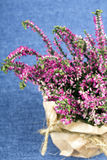 Bouquet of heather Royalty Free Stock Photos