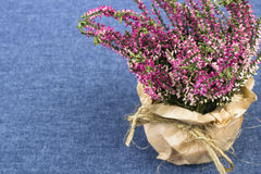 Bouquet of heather Stock Image