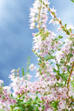 Bouquet of heather flowers Royalty Free Stock Images