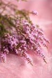 Bouquet of heather flowers Stock Photography
