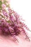 Bouquet of heather flowers Stock Photos