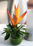 Bouquet heliconia Royalty Free Stock Photos