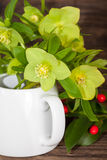 Bouquet of hellebores with red berries Stock Photos
