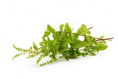 Bouquet of herbs. Bouguet of several herbs on white background Stock Image