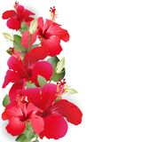 Bouquet with hibiscus stock photography