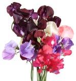 Bouquet humide de bec d'ancre doux Photo stock
