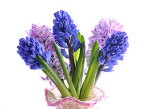 Bouquet of hyacinth Royalty Free Stock Image