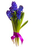 Bouquet Hyacinth. Purple hyacinth flower in closeup over white background Stock Photo