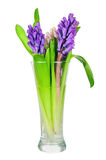 Bouquet from hyacinth flowers arrangement centerpiece isolated o Royalty Free Stock Photo