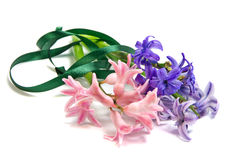 Bouquet of hyacinth Royalty Free Stock Images