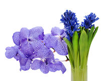 Bouquet from hyacinth and orchidea Royalty Free Stock Image