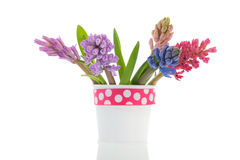 Bouquet Hyacinths Royalty Free Stock Photo