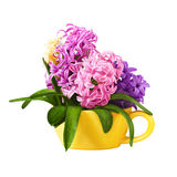 Bouquet hyacinths Stock Images