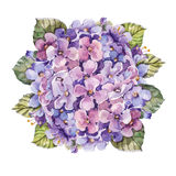 Bouquet hydrangea flower ,  watercolor Royalty Free Stock Images