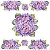 Bouquet hydrangea flower ,   watercolor Stock Photos