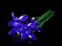 Bouquet of iris in dark Stock Image