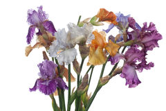 Bouquet of  iris flowers Stock Photography
