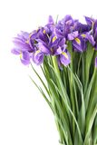 Bouquet of irises Royalty Free Stock Images