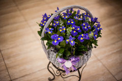 Bouquet of irises in a basket Royalty Free Stock Photo