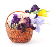 Bouquet of irises. Stock Images