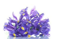 Bouquet of irises Royalty Free Stock Photo