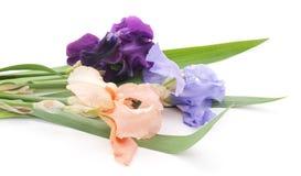 Bouquet of irises. Royalty Free Stock Photos