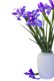 Bouquet of irises flowers Royalty Free Stock Photos
