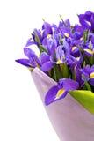 Bouquet of irises Stock Photo